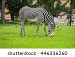 African Zebra At The Green Par...