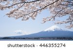 mount fuji and cherry blossoms... | Shutterstock . vector #446355274