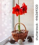 Small photo of Decor winter window with red Hippeastrum (amaryllis) waiting for Christmas