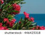 Beautiful Pink Oleander Flower...