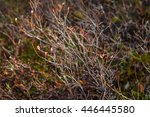 autumn dry grass and small... | Shutterstock . vector #446445580