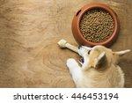 a corgi dog biting a dog bone...   Shutterstock . vector #446453194
