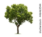 Isolated Tree White Background - Fine Art prints