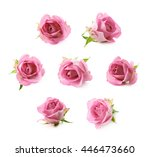 Single Pink Rose Bud Isolated...