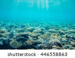 beautiful and diverse coral... | Shutterstock . vector #446558863