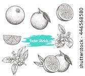 set of vector oranges | Shutterstock .eps vector #446568580