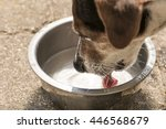 Dog Drinking Water From A Bowl...