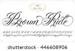 handmade vector calligraphy... | Shutterstock .eps vector #446608906