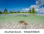 starfish point | Shutterstock . vector #446644864