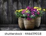basket flowers blossom on... | Shutterstock . vector #446659018