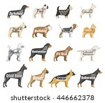 vector dog breeds illustration... | Shutterstock .eps vector #446662378