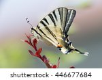 Swallow Tail Butterfly Machaon...