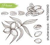 vector sketch of pecan plant... | Shutterstock .eps vector #446700040