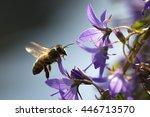 Closeup Of A Western Honey Bee...