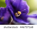 Abstract Of An African Violet ...