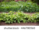 vegetable garden with beds in... | Shutterstock . vector #446780560