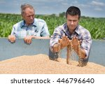 Two Farmers Looking At Wheat...