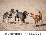 Three Dogs Running With A Stic...