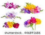 set of fresh freesia clorful... | Shutterstock . vector #446891686
