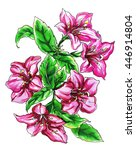 pink weigela shrub exotic...   Shutterstock . vector #446914804