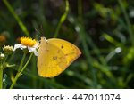 yellow butterfly | Shutterstock . vector #447011074