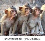 Long Tail Funny Monkeys Of...