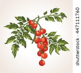 vector bunch cherry tomatoes on ... | Shutterstock .eps vector #447111760