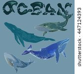 a set of four different whales...   Shutterstock .eps vector #447124393