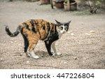 Cat   Uptight Cat   Tiger Cat