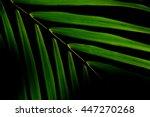 Pattern Of Palm Foliage In Dar...