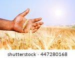 african man hand holding wheat...   Shutterstock . vector #447280168