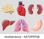 human inner organs set   Shutterstock .eps vector #447299938
