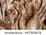 root  root grain  root wood | Shutterstock . vector #447303676