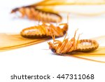 Small photo of alate or termite white ant on white background