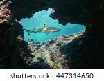 natural hole underwater into... | Shutterstock . vector #447314650