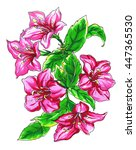 pink weigela shrub exotic... | Shutterstock . vector #447365530
