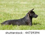 side view profile of black... | Shutterstock . vector #44739394