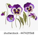 set of pansy flowers | Shutterstock .eps vector #447429568