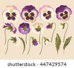 set of pansy flowers | Shutterstock .eps vector #447429574