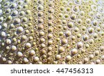 Green Sea Urchin With Details...