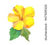 Yellow Hibiscus Flower....