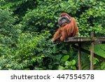 Borneo  Malaysia   September 6...