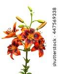 beautiful bouquet of yellow... | Shutterstock . vector #447569338