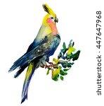 watercolour parrot corella   Shutterstock . vector #447647968