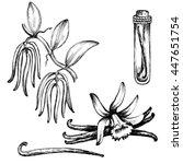 vanilla plant set. hand drawn... | Shutterstock . vector #447651754