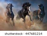 Black Stallions Run Gallop In...