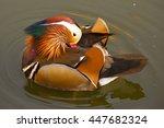 Small photo of Male mandarin duck, Aix galericulata