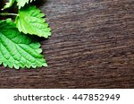 nettle leaves on a dark wooden...   Shutterstock . vector #447852949