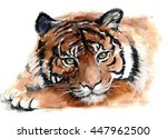 Beautiful Watercolor Tiger On...