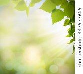afternoon cast  abstract summer ... | Shutterstock . vector #447977659